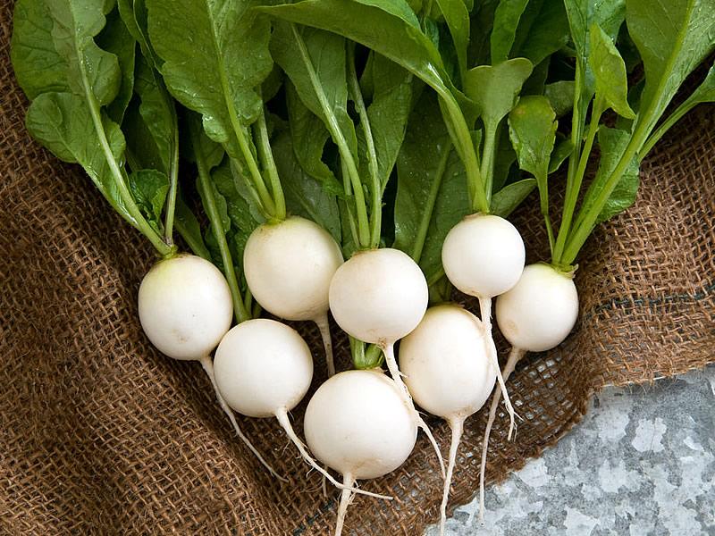 Beyaz turpun faydaları, zararları ve kalorisi