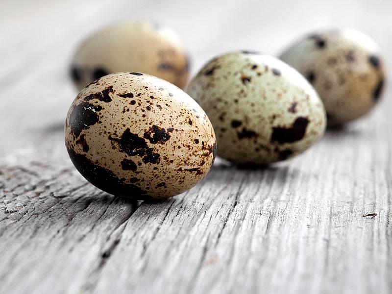 Bıldırcın Yumurtasının Faydaları ve Yan Etkileri Nelerdir?