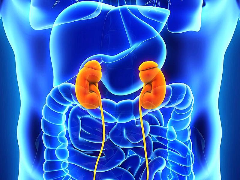 Boşaltım sistemi hastalıkları, organları ve görevleri nelerdir?