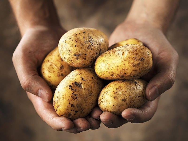 Çiğ patates suyu zayıflatırmı? Nasıl sıkılır? Nasıl kullanılır?
