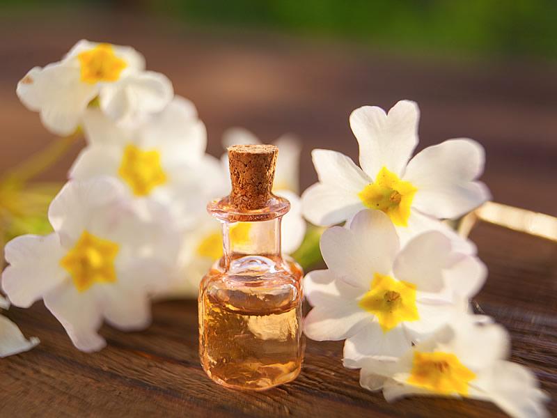 Çuha Çiçeği Yağı Faydaları Nelerdir? Nasıl Kullanılır? Fiyatı ve Zararları