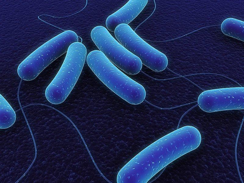Et yiyen bakteri nedir? Et yiyen bakteriler nasıl bulaşır? Korunma yolları nelerdir?