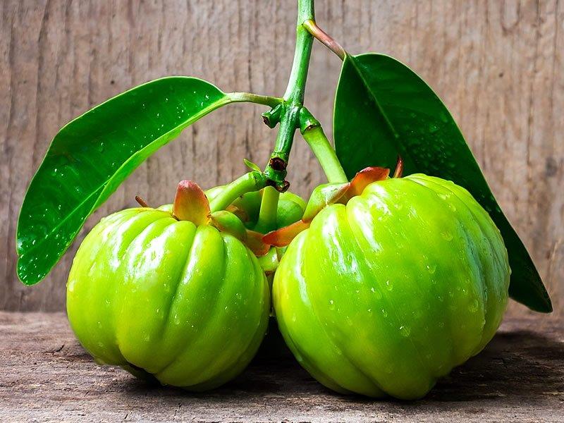 Garcinia cambogia nedir? Zayıflatırmı? Kullananlar, fiyatı, zararları ve faydaları