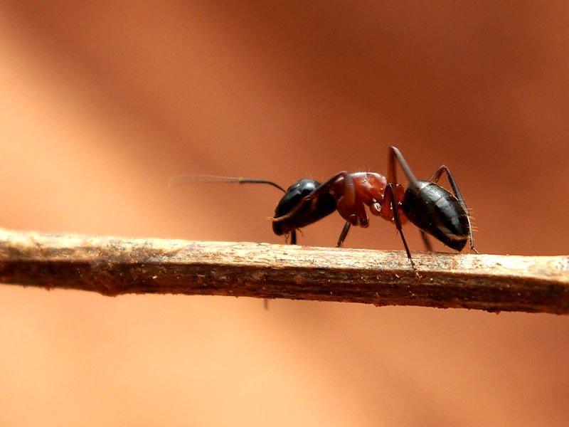 Karınca ısırması nasıl anlaşılır? Tedavisi nasıl yapılır?