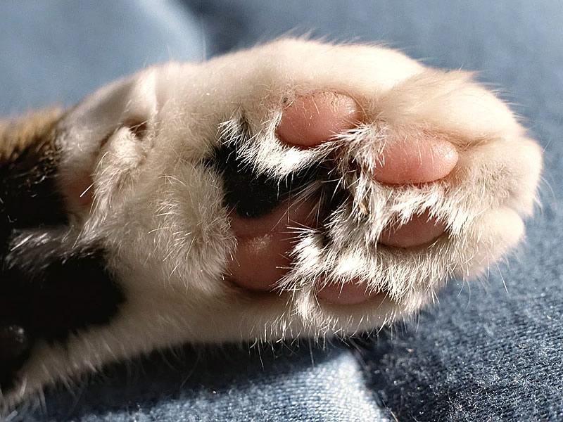 Kedi tırmalamasının zararları ve sonuçları nedir? Sonrasında kuduz aşısı olmak şart mı?