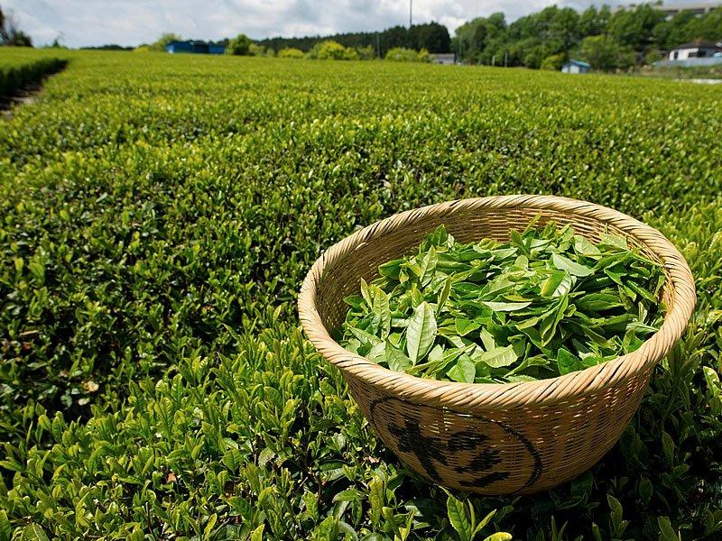 Mevlana çayı nedir? Fiyatı ne kadar? Nerede üretiliyor?