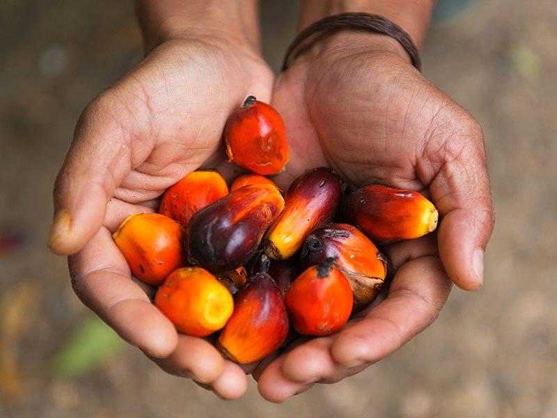 Palm yağı nedir? Neden zararlı? Palm yağının zararları ve faydaları