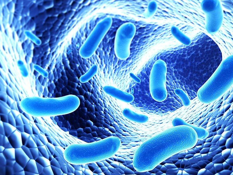 Probiyotik nedir? Faydaları ve zararları