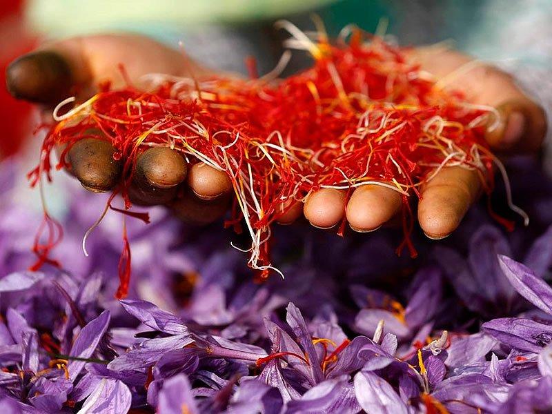 Safran bitkisi ne işe yarar? Nasıl yetişir? Nasıl olur? Faydası ve kullanım alanları