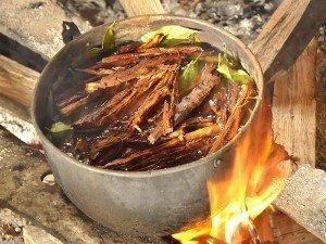 Ayahuasca çayı nedir? Fiyatı, tarifi, kullanımı, faydaları ve yan etkileri