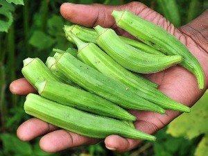 Bamya tohumu ne işe yarar? Nasıl ekilir? Faydaları ve fiyatı nedir?