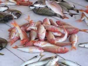 Barbunya Balığı Özellikleri Nelerdir? Faydaları ve Kalorisi