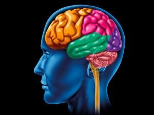 Beyincik dejenerasyonu hastalığı belirtileri ve nedenleri