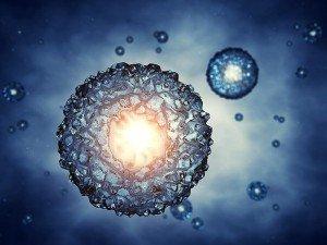 Bitki ve hayvan hücresi arasındaki farklar ve benzerlikleri nelerdir?