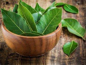 Defne nedir? Defne yaprağının faydaları, zararları ve kullanımı