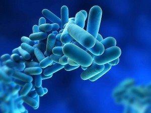 Enterogermina fiyatı ne kadar? Bebeklerde ve yetişkinlerde kullanımı