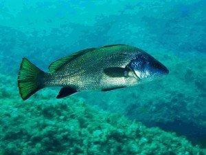 Eşkina balık taşı nedir? Faydaları nelerdir? Nerede bulunur? Kaç gün kullanılır?