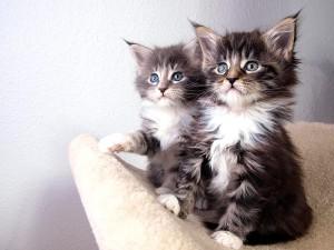 Evde kedi beslemenin zorlukları, zararları ve faydaları nelerdir?