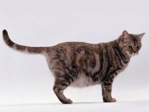 Hamile Kedi Belirtileri Nelerdir? Nasıl Anlaşılır? Psikolojisi Nasıl Olur?