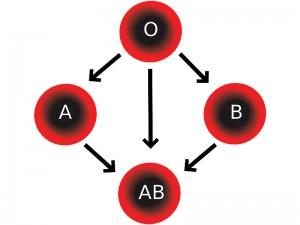 Hangi Kan Grubu Hangisine Verir? Hangi Kan Grupları Birbirine Kan Veremez?