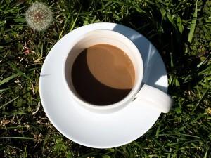 Hindiba Kahvesinin Faydaları ve Zararları Nedir? Nasıl İçilir?