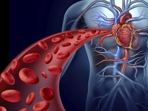 Kan dolaşımını hızlandırmak ne işe yarar? Hızlandıran bitkiler nelerdir?