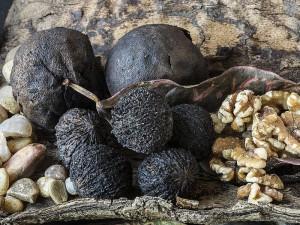 Kara ceviz tohumu ve tozu nedir? Fiyatları ne kadar?