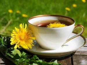 Karahindiba çayı ne işe yarar? Nasıl demlenir? Fiyatı, faydaları ve zararları