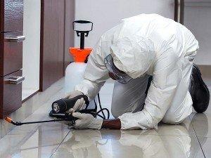 Karıncaların evden gitmesi için ne yapılmalı?