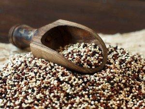 Kinoa bitkisi nedir? Neye yarar? Nerede kullanılır? Nasıl ekilir?