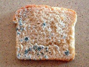 Küflü ekmek yemenin zararları nelerdir? Yersek ne olur?