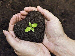 Organik tarım nedir? Nasıl yapılır? Neden önemlidir?