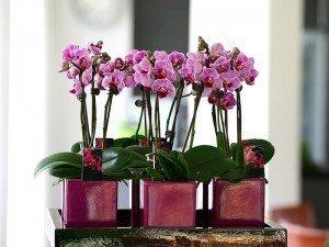 Orkide bakımı nasıl yapılır? Orkide nasıl çoğaltılır?