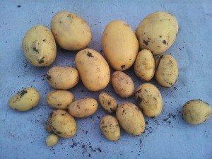 Patates suyu kilo verdirir mi? Patates suyu ile zayıflama