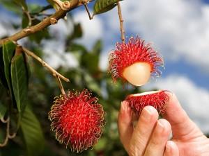 Rambutan Meyvesinin Faydaları Nelerdir? Türkiye'de Yetişir mi?