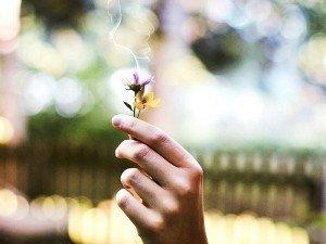 Sigarayı bıraktıran otlar ve bitkisel kürler