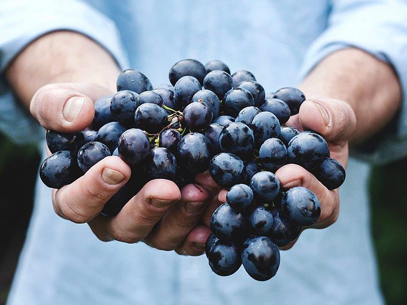 Üzüm çekirdeği çayı nasıl yapılır? Faydaları ve etkileri